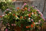 Hummingbird (10 of 11)